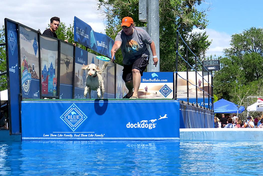 Los 'peludos' pudieron participar en un laberinto de obstáculos y búsqueda de juguete en una piscina, lo cual divirtió tanto a perros como a las personas que los observaban, el sábado 1 de ...