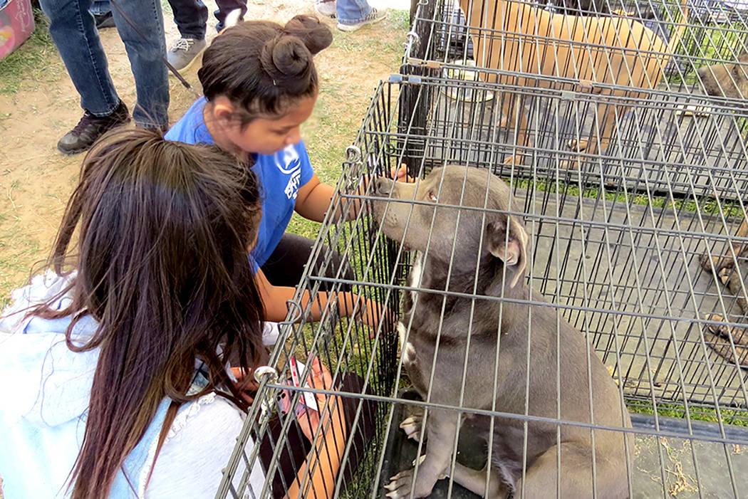 Quizá no todos los 'peludos' se divirtieron, ya que hubo un gran número de perros que fueron llevados a este evento con la intención de encontrarles un nuevo y responsable dueño, el sábad ...