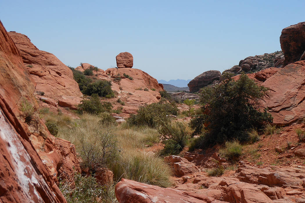 Red Rock Canyon es una joya natural de Las Vegas. Buen lugar para celebrar el Día de la Tierra el sábado 22 de abril. | Foto El Tiempo/Valdemar González