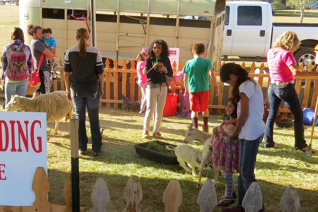 SG 2: Los más pequeños pudieron aprender sobre el cuidado de los animales en el zoológico infantil. Miércoles 10 de mayo en el parque Craig Ranch. Foto El Tiempo.