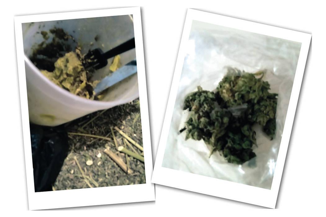 Sobrantes de marihuana, tallos y residuos que sirven para hacer los concentrados y margarina. Fotos tomadas en el apartameto del norte de la ciudad. | Cristian De la Rosa/El Tiempo.
