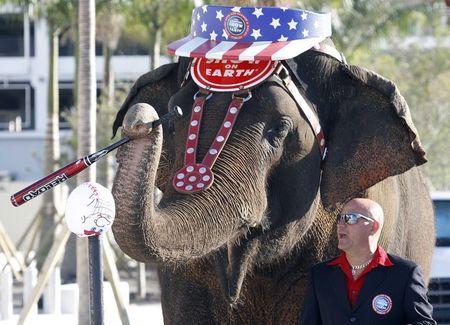 """Taba Maluenda, entrenador de animales del circo Ringling Brothers, dirige a un elefante indú nombrado """"Asia"""", en foto de archivo del 5 de enero del 2012, en  Miami. El circo Ringling Bros. and Ba ..."""