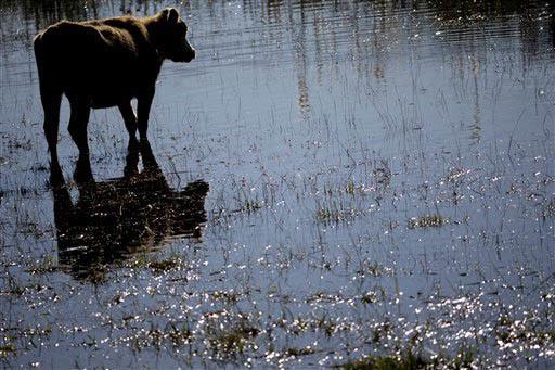 Argentina pasa por inundaciones e incendios al mismo tiempo en diversas regiones del país. (Foto Archivo/AP/Natacha Pisarenko).