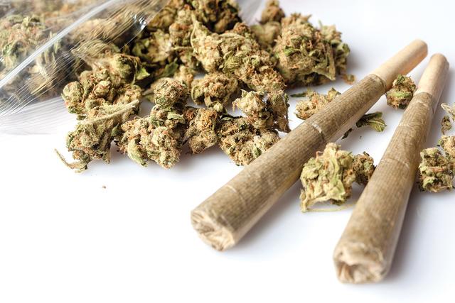 La legalización de la marihuana se decidirá en las elecciones del 8 de noviembre.