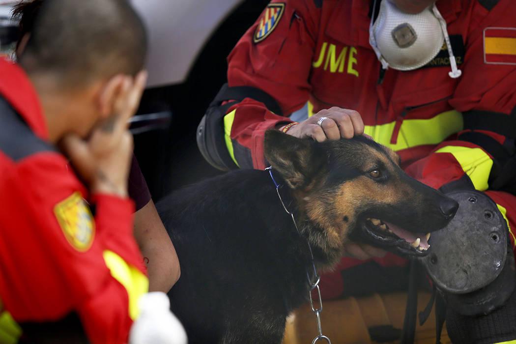 Un trabajador de rescate español acaricia a su perro de búsqueda mientras toman un descanso en un sitio donde se cree que la gente está atrapada dentro de un edificio de oficinas colapsado en l ...