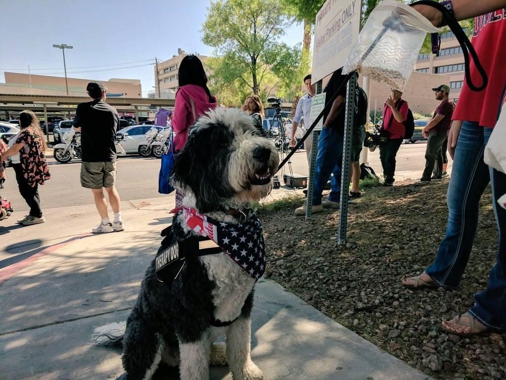 Fotografiado fuera de UMC, el perro de terapia Lucy ha estado visitando unidades de sangre para Las Vegas víctimas de tiroteo para tratar de ayudar a mantener el ánimo de las personas. (Colton L ...