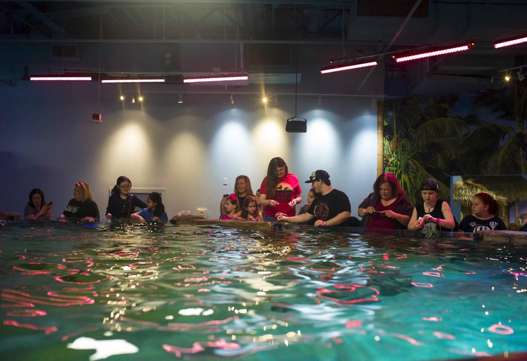 SeaQuest Interactive Aquarium en Boulevard Mall en Las Vegas el viernes 14 de abril de 2017. Miranda Alam Las Vegas Review-Journal @miranda_alam