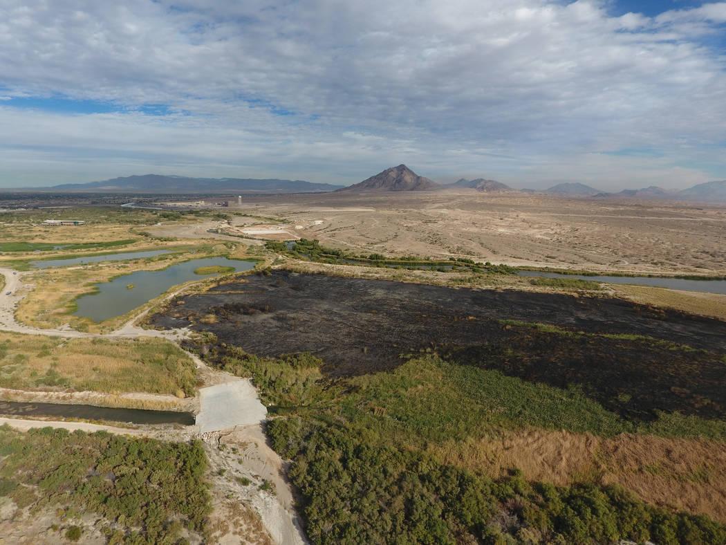 Alrededor de 10 a 12 hectáreas del Clark County Wetlands Park cerca del estadio Sam Boyd fueron carbonizados por un incendio el lunes 6 de noviembre de 2017 en Las Vegas. Michael Quine / Las Vega ...