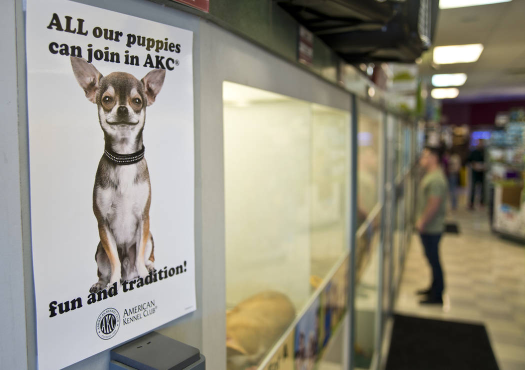 Un letrero anuncia la naturaleza pura de los perros a la venta en Petland Las Vegas el miércoles, 8 de noviembre de 2017. La tienda es una de las dos en el valle que se verán afectadas por la pr ...