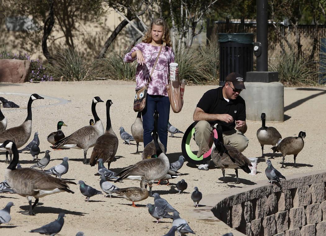 Derrick Sloop y su hija Corinn alimentan pájaros durante el Día Internacional de Aves Migratorias el martes 21 de noviembre de 2017 en Sunset Park Lake en Las Vegas. Bizuayehu Tesfaye Las Vegas  ...