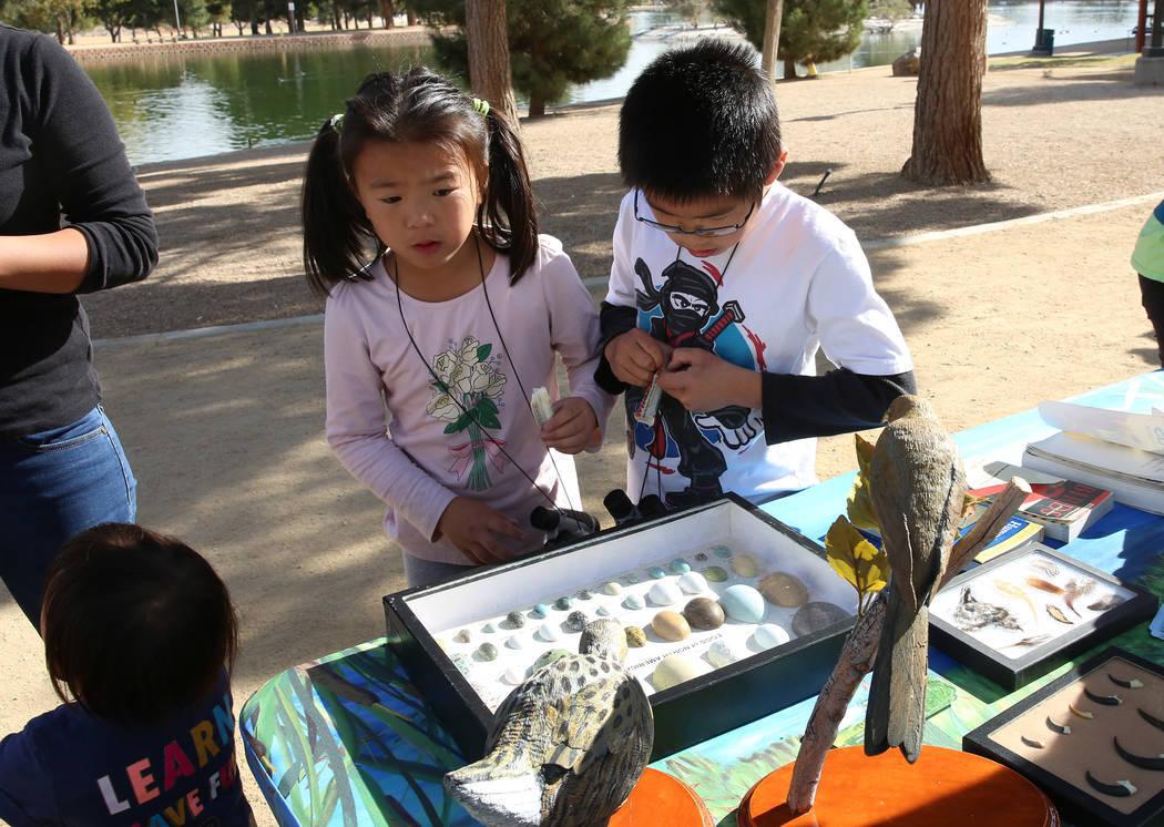 Ally Chen, 7, izquierda, y Edison Zhang, 9, observan huevos de aves comunes en América del Norte durante el Día Internacional de Aves Migratorias el martes 21 de noviembre de 2017 en Sunset Park ...