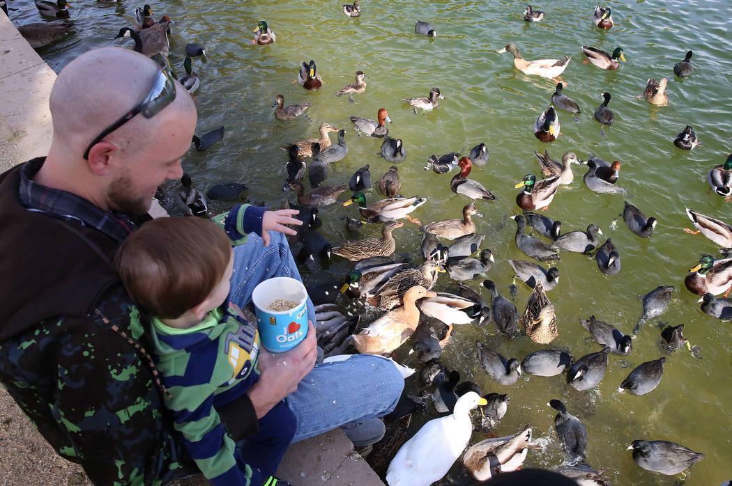Paul Gustafson Jr. y su hijo Paul III alimentan pájaros durante el Día Internacional de Aves Migratorias el martes 21 de noviembre de 2017 en Sunset Park Lake en Las Vegas. Bizuayehu Tesfaye Las ...