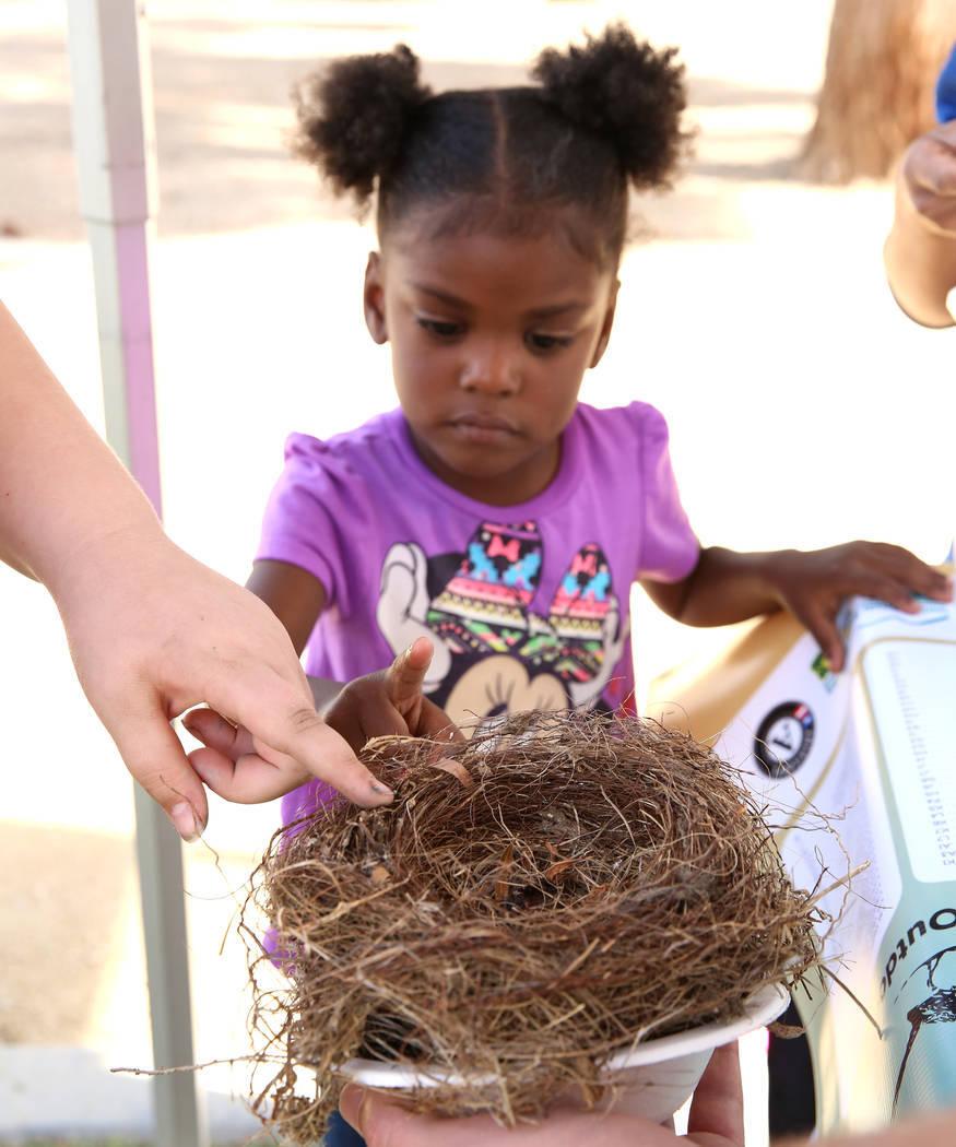 Nyriah, de 3 años, toca un nido de pájaro durante el Día Internacional de Aves Migratorias el martes 21 de noviembre de 2017 en Sunset Park Lake en Las Vegas. Bizuayehu Tesfaye Las Vegas Review ...