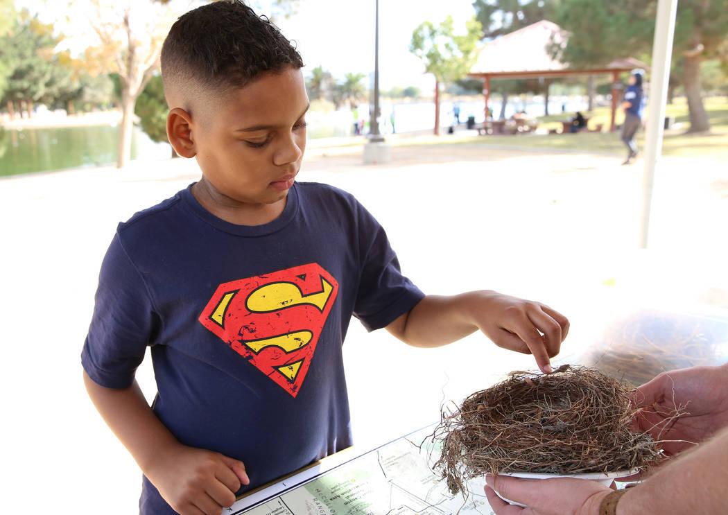 Jason, de 10 años, toca un nido de pájaro durante el Día Internacional de Aves Migratorias el martes 21 de noviembre de 2017 en Sunset Park Lake en Las Vegas. Bizuayehu Tesfaye Las Vegas Review ...