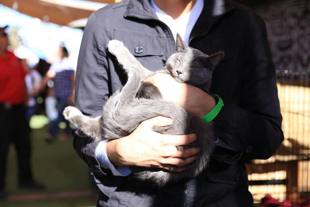 Meow or Never ha realizado dos eventos pop-up en Las Vegas para ayudar a adoptar gatos y recaudar dinero para un café de ladrillo y mortero en el valle suroeste. El evento se llevó a cabo en el  ...