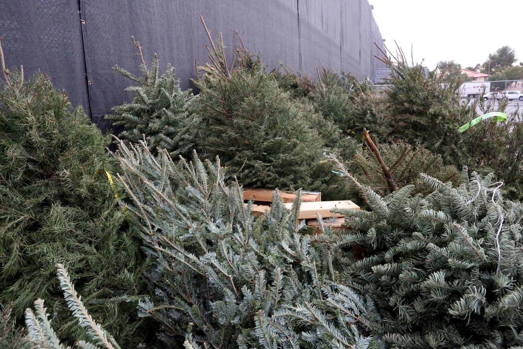 Los árboles de Navidad que no se vendieron se alinean en la pared exterior del jardín de Lowe's Home Improvement en Charleston Boulevard, donde se reciclarán con otros árboles depositados el m ...