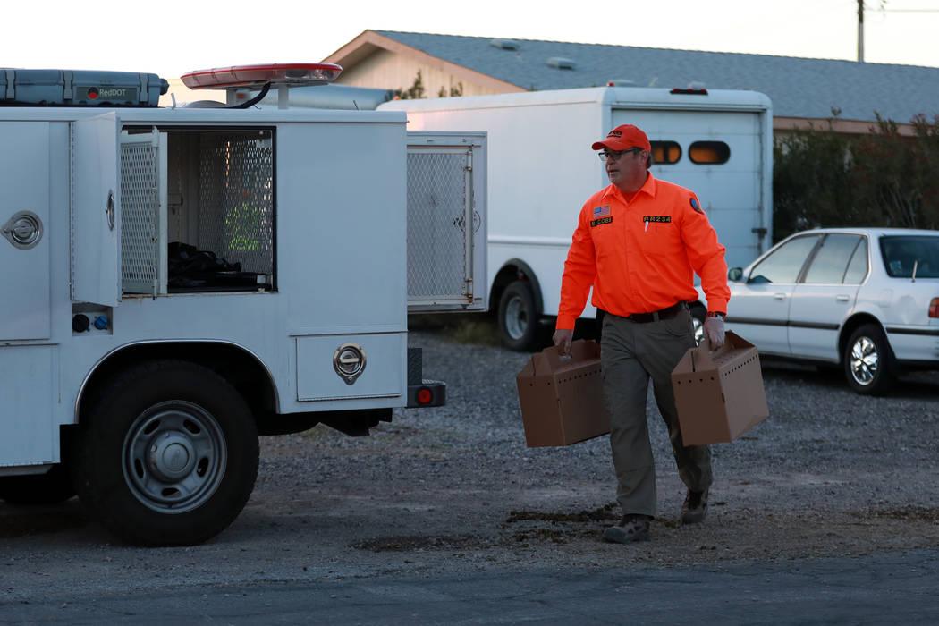 Bill Cobb de Red Rock Search and Rescue evacua gallos de una propiedad  involucrada en una investigación sobre animales abandonados, en Las Vegas, el domingo 21 de enero de 2018. Andrea Cornejo L ...
