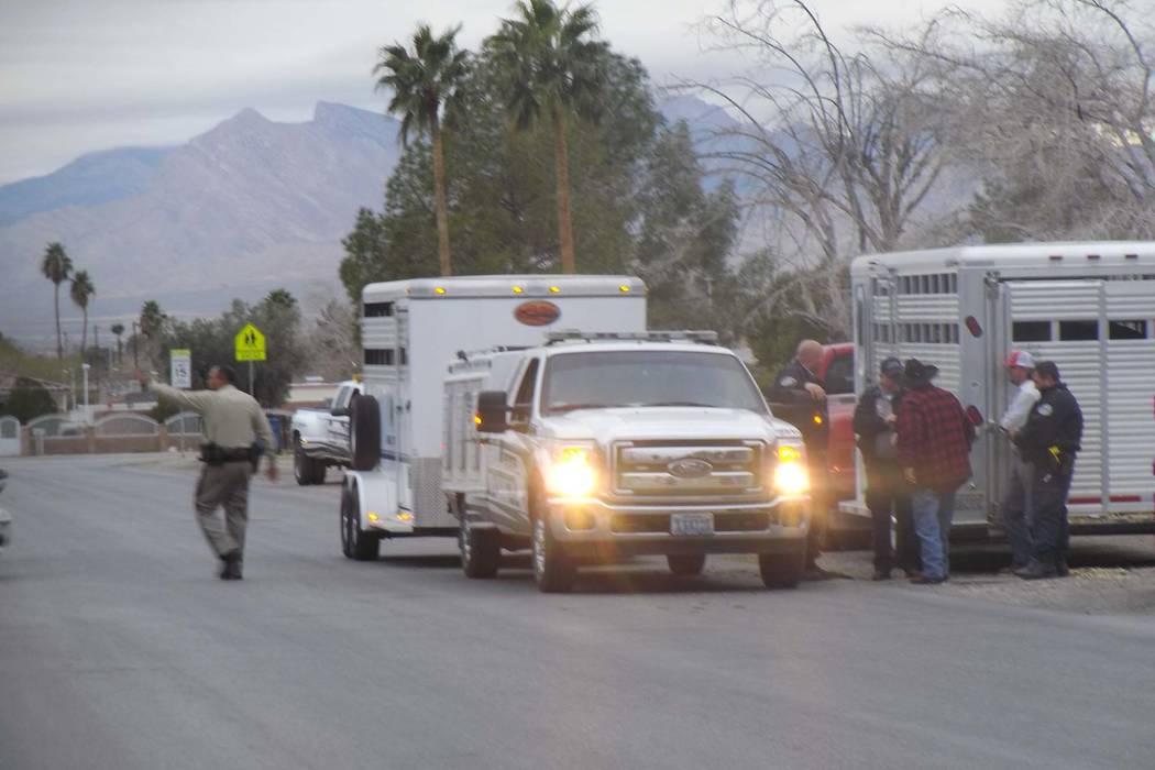 La policía de Las Vegas se asoció con Control Animal de Las Vegas para capturar a un toro fugitivo en la cuadra 1900 de la calle Ophir, cerca del bulevar Martin Luther King y la avenida Washingt ...