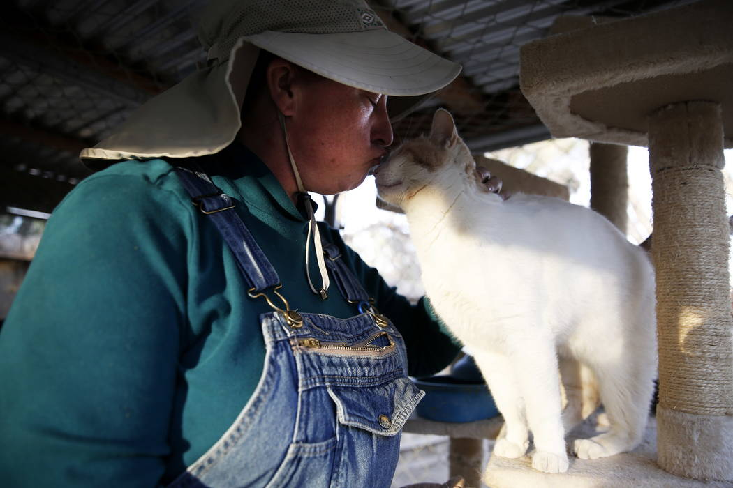 Kelly Trobaugh, presidenta de Barn Buddies Rescue, le da un beso a un gato después de colocar mantas calientes en el recinto de gatos en Barn Buddies Rescue en The Farm en Las Vegas el domingo 18 ...