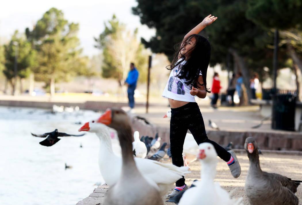 Isabella Andia, de 6 años, alimenta a los patos en Sunset Park en Las Vegas el domingo 18 de febrero de 2018. Andrea Cornejo Las Vegas Review-Journal @DreaCornejo