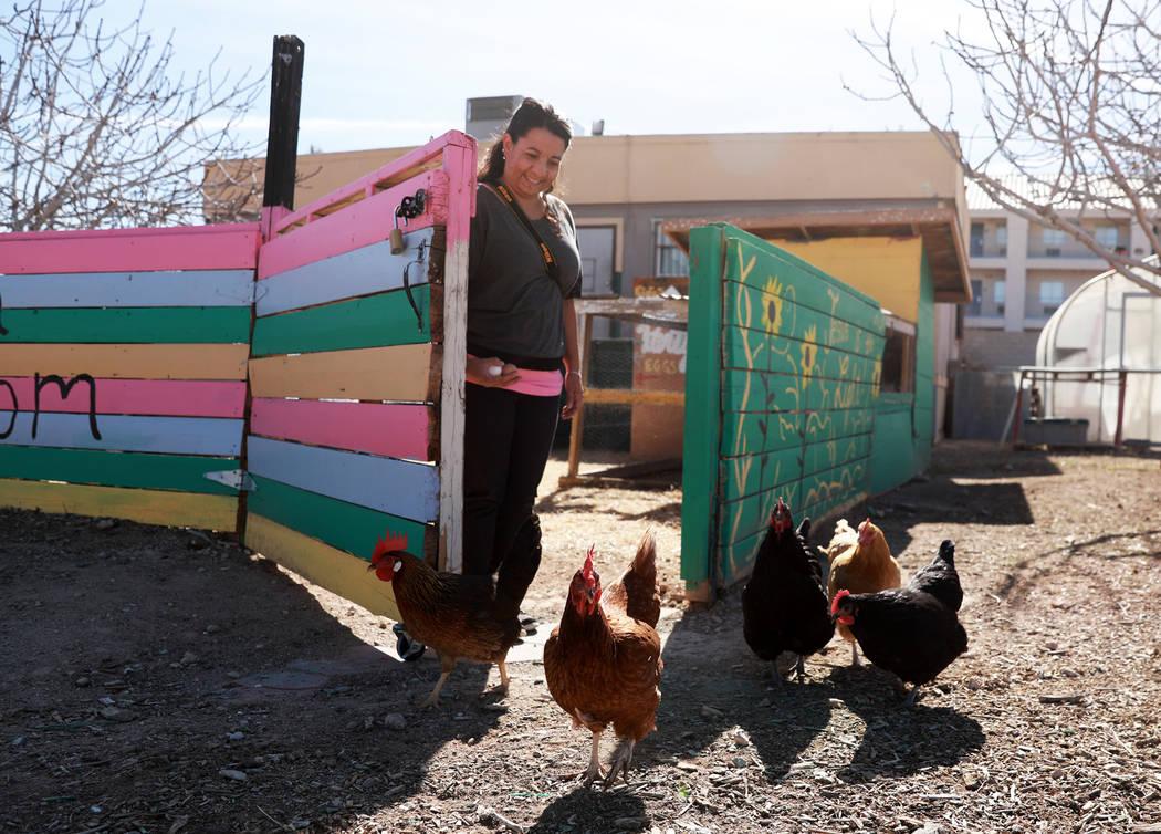 Erin Holloway, gerente de la oficina, deja las gallinas fuera de su corral en el Vegas Roots Community Garden el viernes en Las Vegas, el 9 de febrero de 2018. El mercado de agricultores móviles, ...