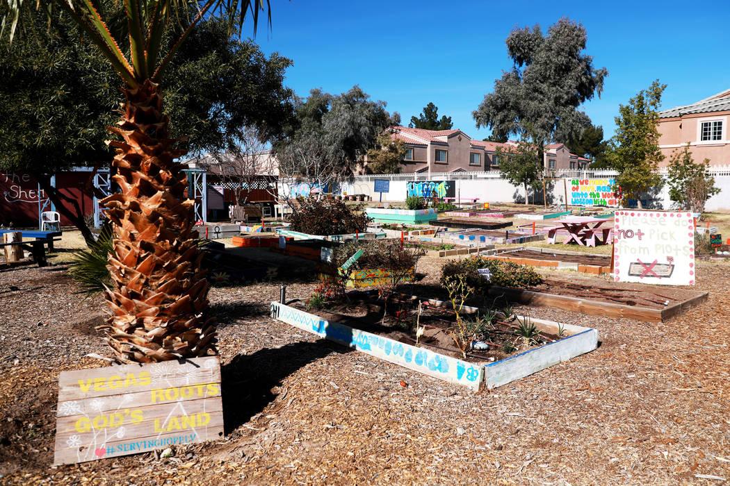 Una vista del Vegas Roots Community Garden el viernes en Las Vegas, el 9 de febrero de 2018. El mercado de agricultores móviles, conocido como Veggie Buck Truck, se dirigirá a Henderson en la pr ...