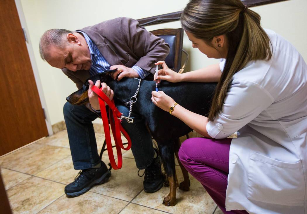 La Dra. Brittney Spurling, veterinaria del Cheyenne West Animal Hospital, administra la vacuna contra la gripe a Harley, un Doberman de un año, en Las Vegas el viernes 16 de febrero de 2018. (Cha ...