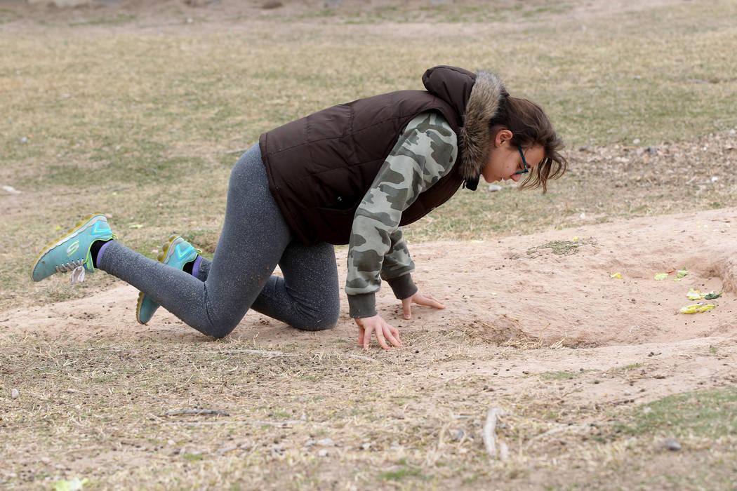 Luna Bermúdez, de 12 años, intenta capturar conejos en el campus West Charleston del estado de Nevada el lunes 19 de febrero de 2018. Grupos de rescate de conejos dicen que encontraron muchos de ...