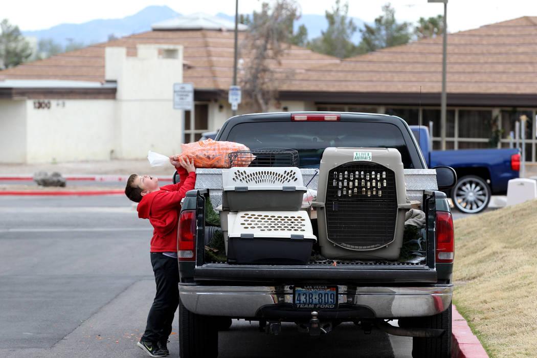 Brayden Broach, de 9 años, descarga zanahorias para capturar conejos en el campus West Charleston del estado de Nevada. Lunes, 19 de febrero de 2018. Grupos de rescate de conejos dicen que encont ...