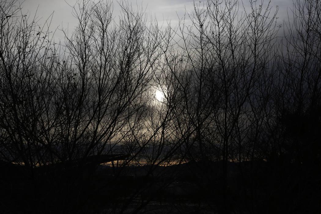 El sol de la mañana atraviesa los árboles del invierno, visto desde 7050 Wetlands Park Lane, donde un fuego de maleza que comenzó el martes por la noche en el Parque Wetlands del Condado Clark  ...