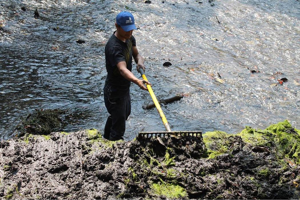 ARCHIVO.- Con la finalidad de ofrecer un espacio óptimo a los visitantes del Área Natural Protegida (ANP) Parque Barranca Chapultepec, trabajadores realizaron labores de extracción manual de ap ...