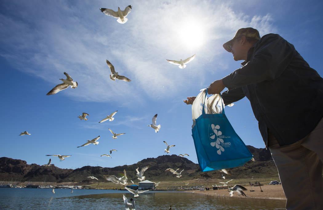 El residente de Henderson: Byron Vázquez, alimenta gaviotas y peces en el área del puerto Hemenway del Área Recreativa Nacional Lake Mead el lunes 19 de marzo de 2018. Vázquez y su esposa Rose ...