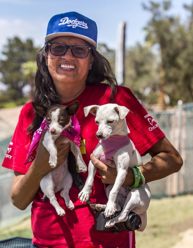 Dinorah Arambula sostiene a sus dos chihuahuas, Peque de 3 meses y Chica de 6 meses de edad, en Cashman Field en Las Vegas el domingo 22 de abril de 2018. Patrick Connolly Las Vegas Review-Journal ...