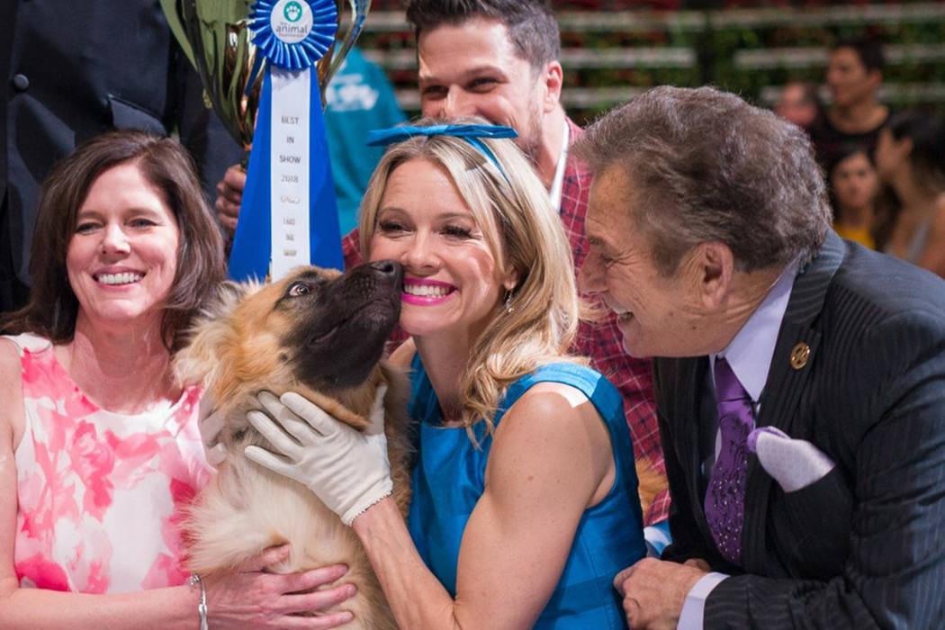 Bonnie fue el perro ganador de 'Best in Show 2018'. 22 de abril de 2018 en Thomas & Mack Center. Foto Cortesía The Animal Foundation.