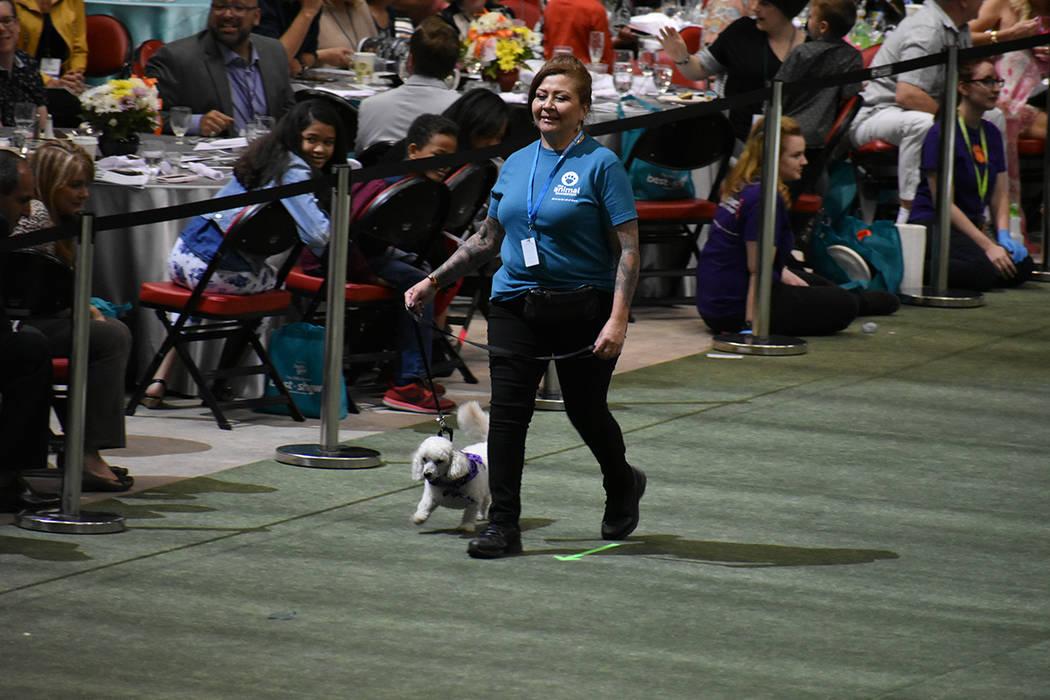 Durante todo el año, hay cientos de animales disponibles para adopción en The Animal Foundation. 22 de abril de 2018 en Thomas & Mack Center. Foto El Tiempo.