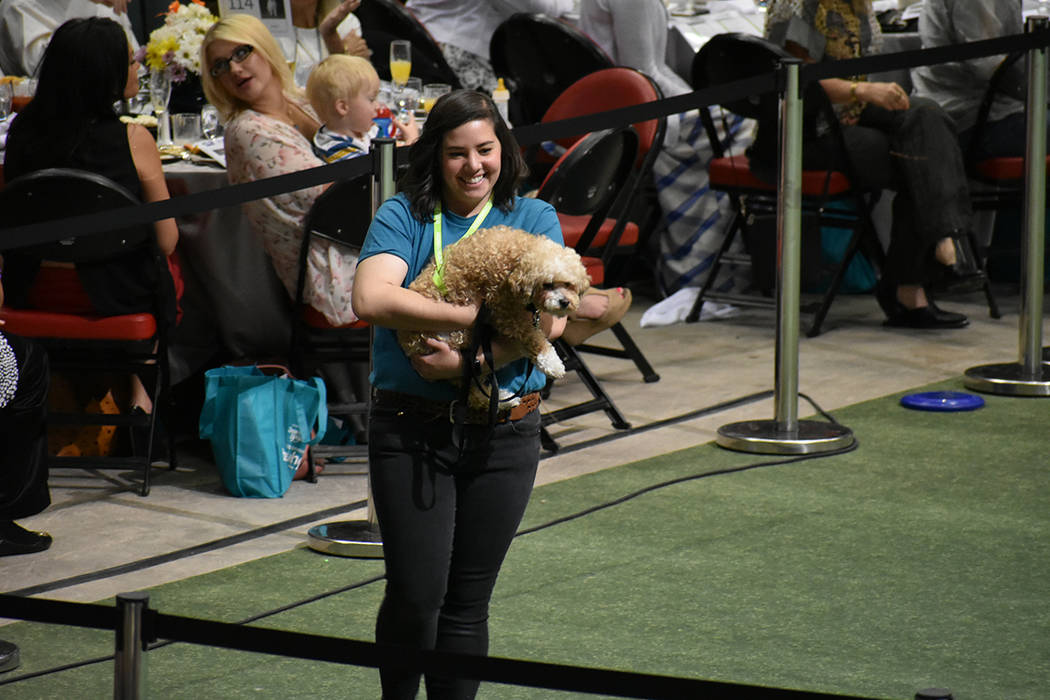Perros de todos los tamaños participaron con el anhelo de ser adoptados. 22 de abril de 2018 en Thomas & Mack Center. Foto El Tiempo.