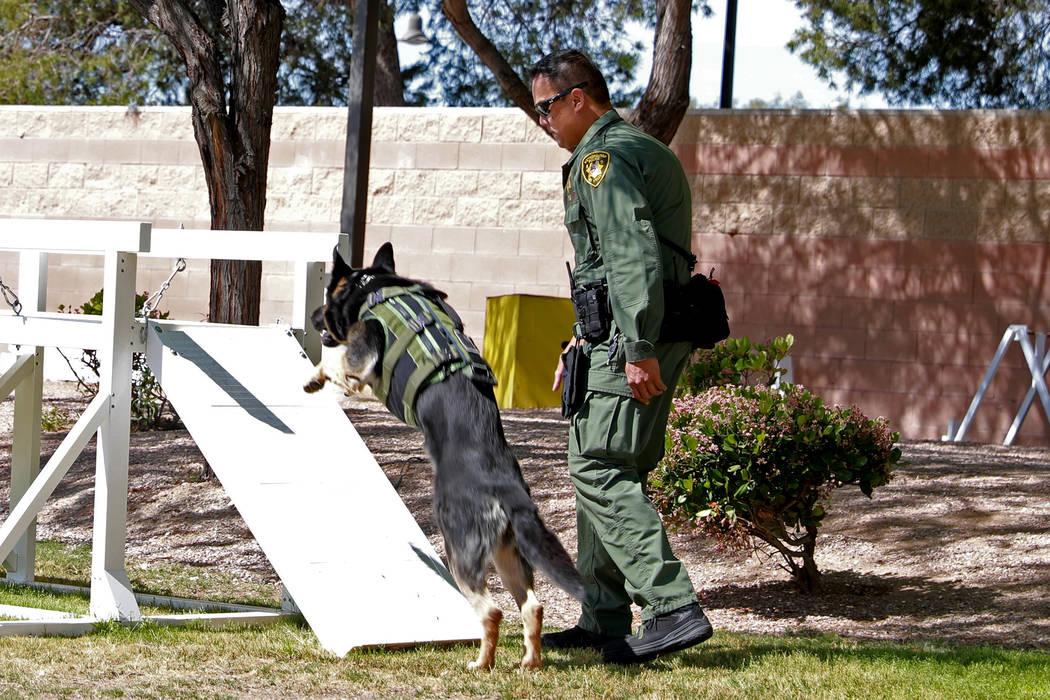 """El oficial Glenn Obsenares guía a """"Knight"""" a través de una carrera de obstáculos en el Departamento de Policía Metropolitana de Las Vegas en Las Vegas el jueves 26 de abril de 2018. Las Vegas ..."""