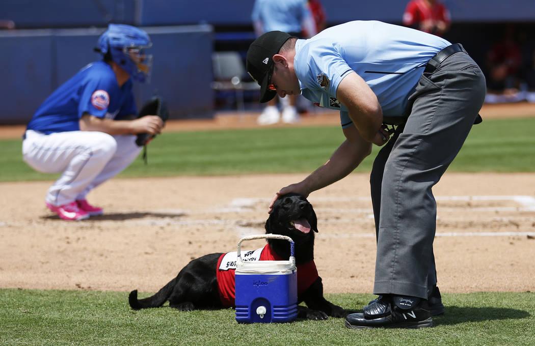 El árbitro Bryan Fields, y el perrito de los bates de Las Vegas 51s, Finn, después de que el labrador retriever de 5 años le trajera una botella de agua durante un juego contra los Isótopos de ...