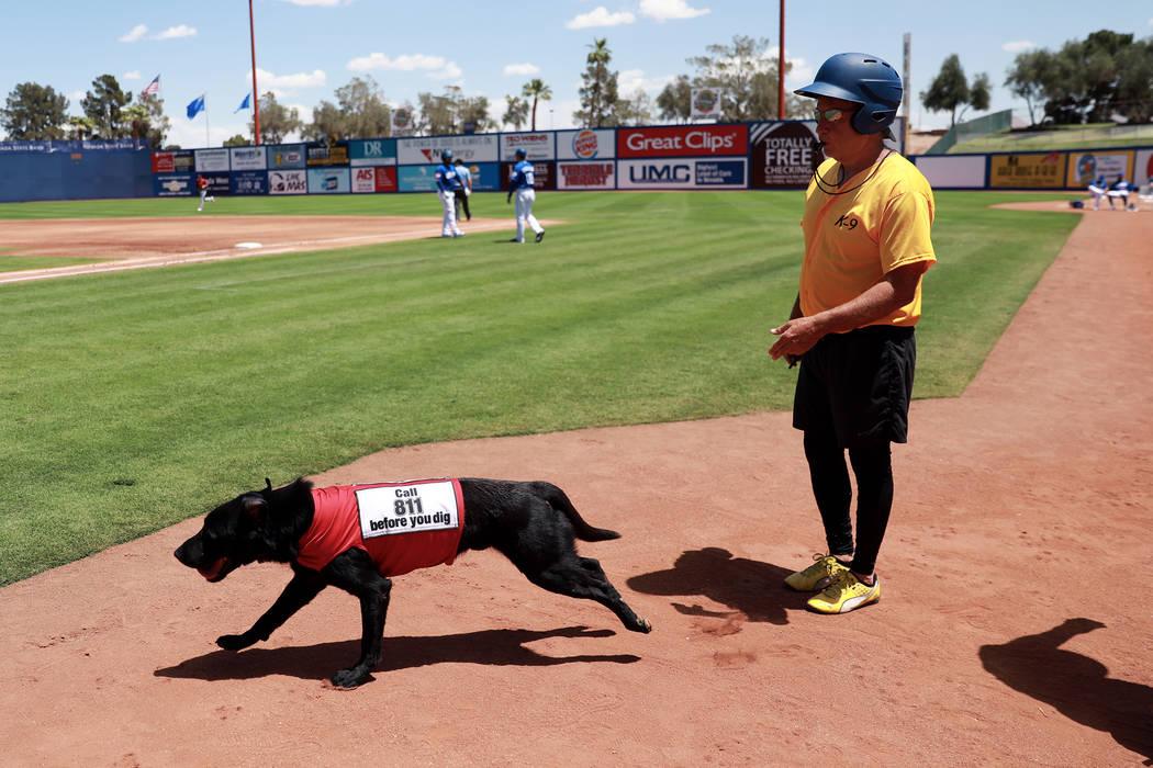 Fred Hassen, fundador del entrenamiento de perros Sit Means Sit, envía al perro finlandés de Las Vegas 51s para buscar un bate durante un juego contra los Isótopos de Albuquerque en el Cashman ...