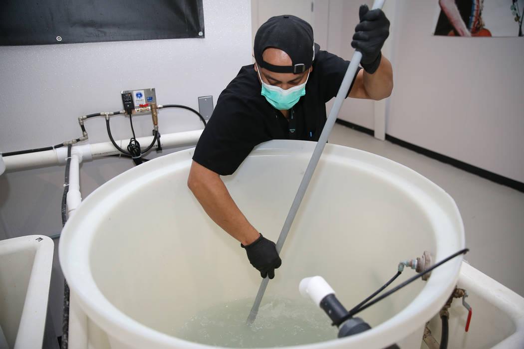 Christian Lingatong, líder de cultivación en Redwood Cultivation, mezcla nitrato de calcio para una solución de nutrientes en las instalaciones de cultivo en Las Vegas, el sábado 2 de junio de ...