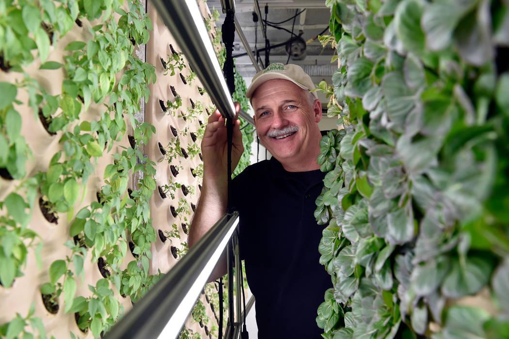 David Martin, CEO de Indoor Farms of America se encuentra dentro de su jardín de demostración realizado con paneles aeropónicos verticales en su almacén el miércoles 6 de junio de 2018 en Las ...