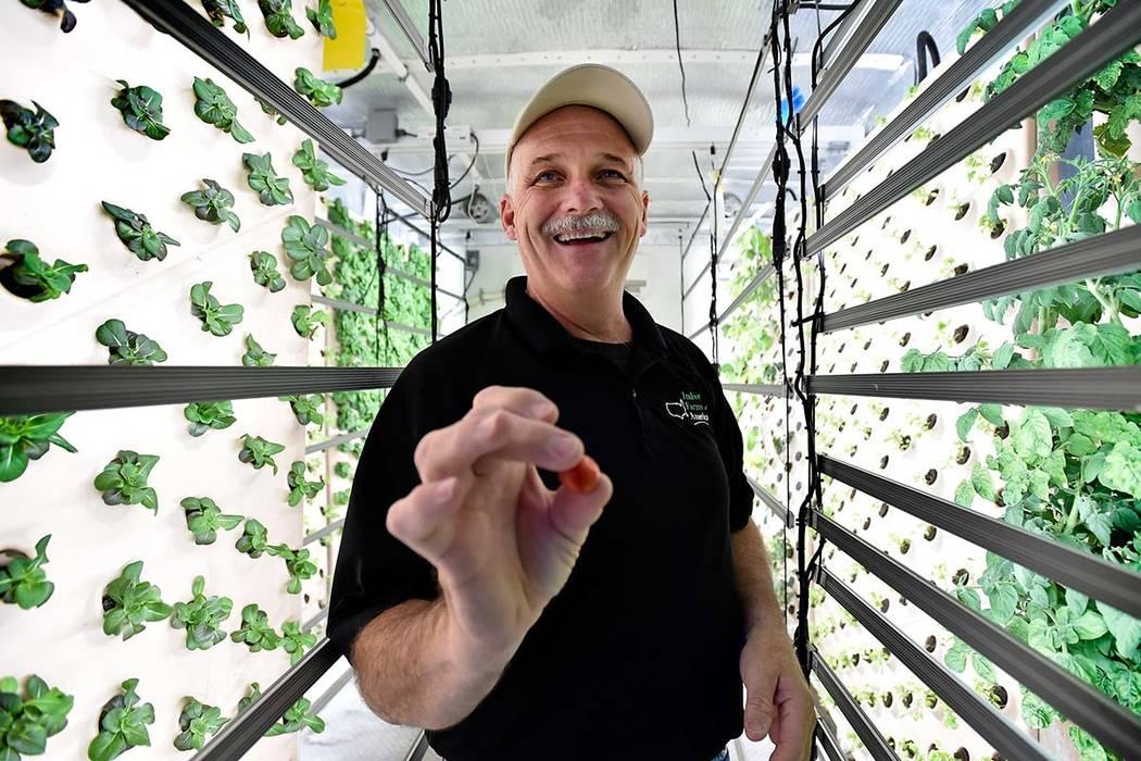 David Martin, CEO de Indoor Farms of America ofrece un tomate cherry recién cosechado de una planta cultivada en un panel aeropónico vertical en su almacén el miércoles 6 de junio de 2018 en L ...