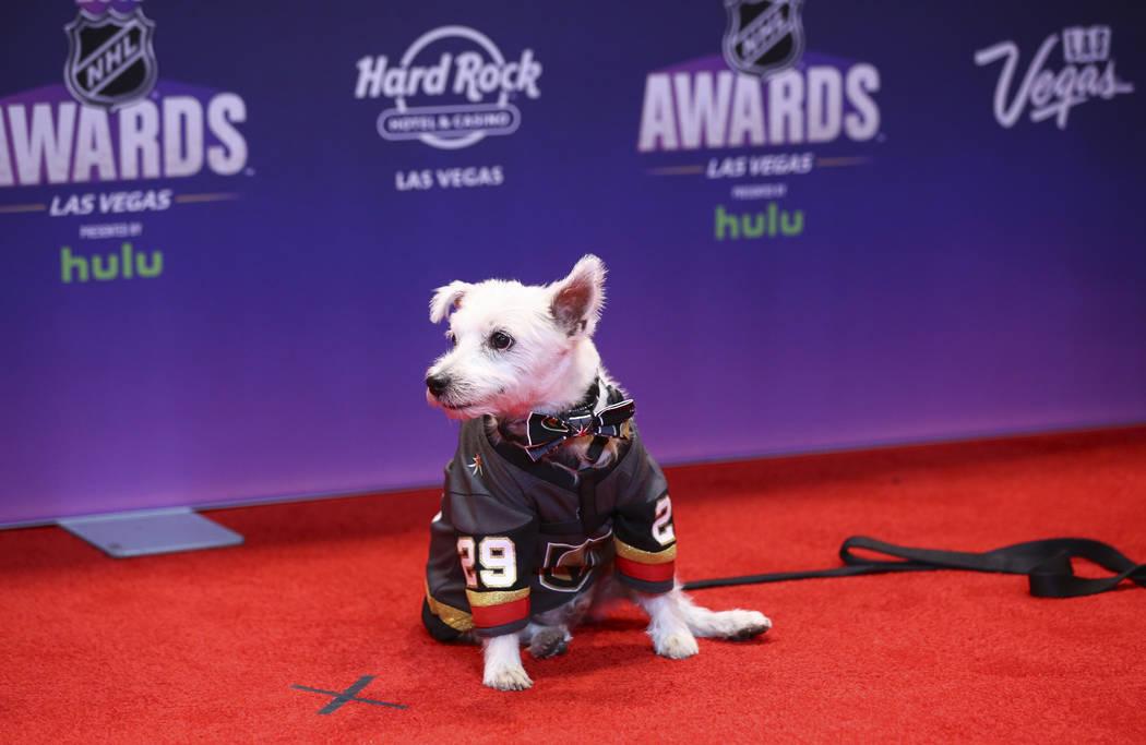 Bark-André Furry posa en la alfombra roja antes de los Premios NHL en el Hard Rock Hotel de Las Vegas el miércoles 20 de junio de 2018. Chase Stevens Las Vegas Review-Journal @csstevensphoto