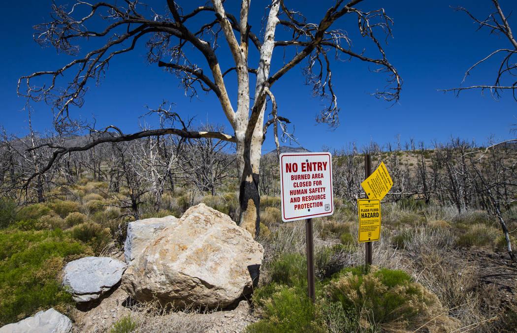 Las señales a lo largo de Harris Mountain Road muestran advertencias después del incendio de Carpenter 1 en el Área Nacional de Recreación de Spring Mountains el viernes 6 de julio de 2018. Re ...