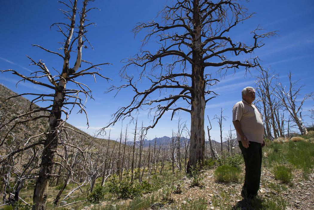 James Hurja, científico de suelos del Servicio Forestal de EE.UU., habla sobre las secuelas del incendio de Carpenter 1 en el Área Nacional de Recreación de Spring Mountains el viernes 6 de jul ...
