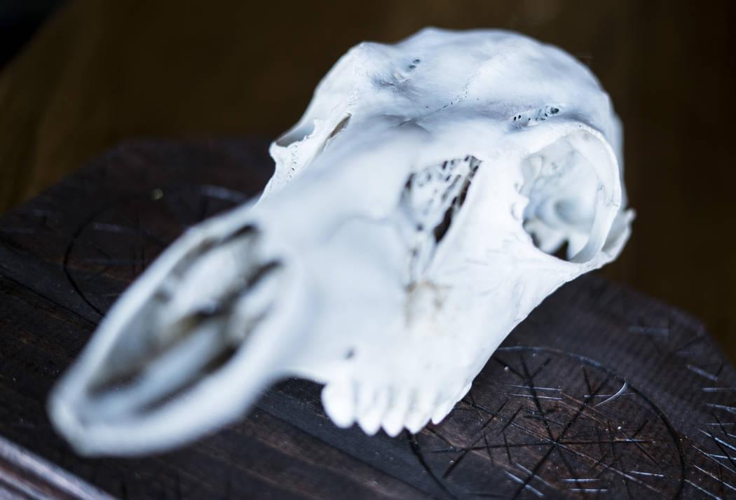 Una foto del cráneo de ciervo de Erin Emre delante del Mercado de Artes Oscuras en Cornish Pasty Co. en Las Vegas, martes 10 de julio de 2018. (Marcus Villagran / Las Vegas Review-Journal) @broke ...