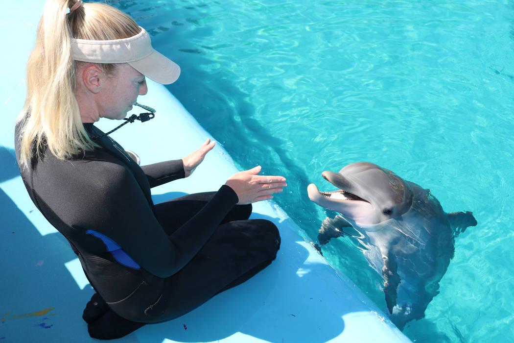 La especialista de cuidado de delfines de Dolphin Habitat, Lacey Russell, interactúa con Coco, en Siegfried y Roy's Secret Garden de Mirage y Dolphin Habitat el 11 de julio de 2018 en Las Vegas. ...