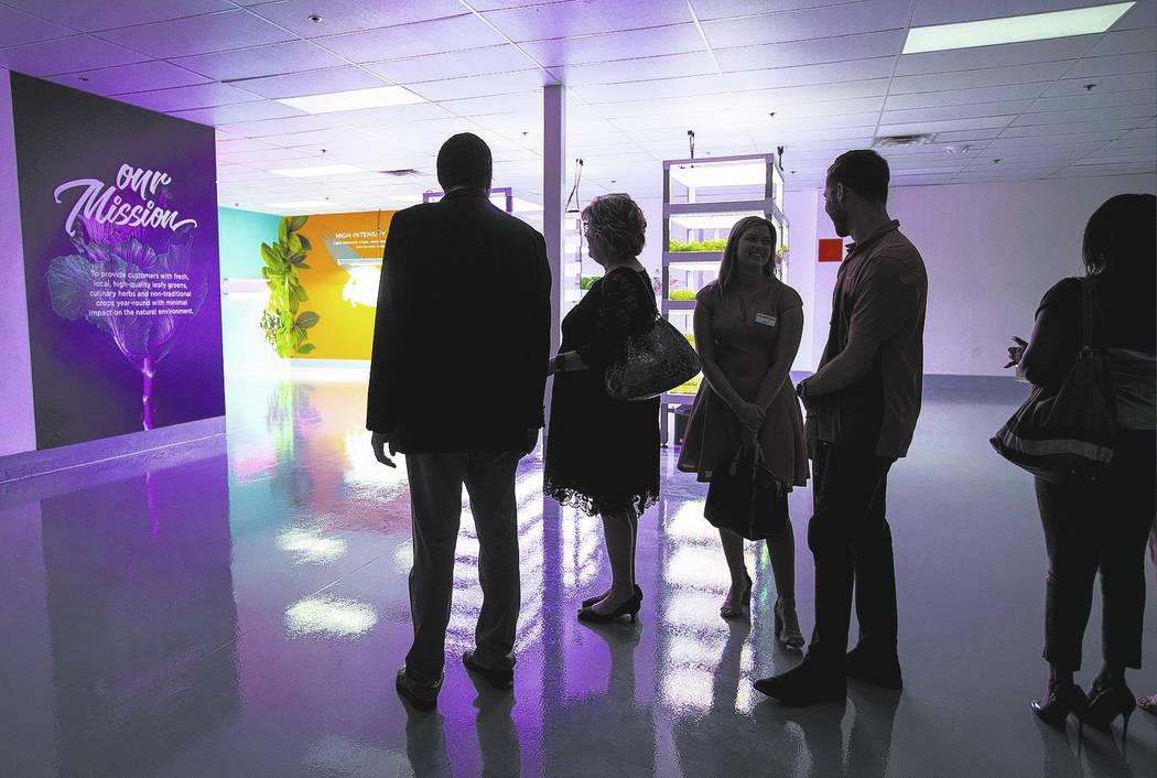 Los asistentes comienzan una gira durante Oasis Biotech, una compañía agrícola de interior, durante el evento de inauguración en Las Vegas el miércoles 18 de julio de 2018. Revista-Diario Cha ...