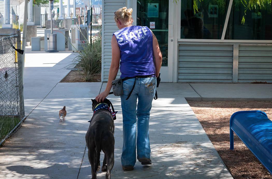 Diariamente llegan de 80 a 125 animales al refugio de The Animal Foundation. Foto Cortesía.