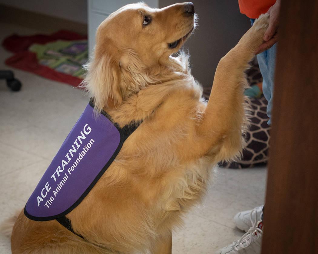 ACE está dedicado a ofrecer capacitación en obediencia y habilidades de socialización para perros de tamaño grande. Foto Cortesía.